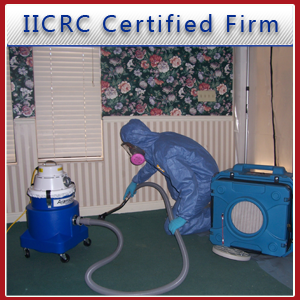 Mold Remediation - St. George, UT - Rose Restoration, Inc. - Disaster Management Solutions - Mold removal - IICRC Certified Firm